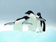 เพนกวิน น่ารัก