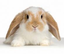 กระต่ายตัวน้อย น่ารัก