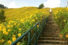 Sun Flowers (^-^)