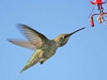 Hummingbird ‧:﹎。‧::‧ (^∇^) 3