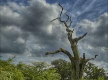 ต้นไม้กับธรรมชาติ