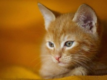 Feline Expression.•°•.° <( ̄︶ ̄)/
