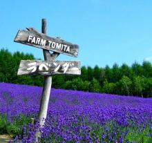 ฟาร์ม Tomita:Japan