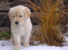 Lovely Puppy •°•.° ღ. 2