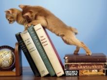 The Mischievous Kittens .•°•.° (o^.^o) 2