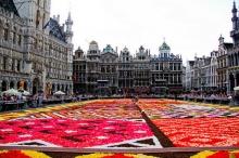 พรมดอกไม้ กลางจตุรัสพระราชวัง ในเบลเยี่ยม