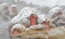 รวมภาพสัตว์ในหิมะ