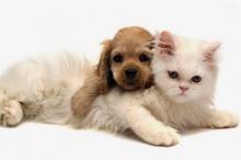 ต่างขั้วสุดฮา หมาและแมว