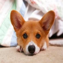 รวมสายพันธุ์สุนัขระดับโลก