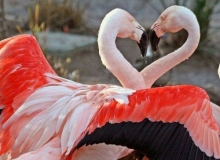คู่รักสัตว์โลก In love