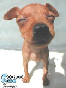 รูปหมาน่ารัก