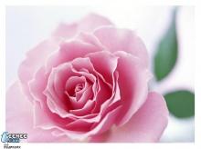 มีความรักมาให้มีดอกใม้มาฝาก จ้า