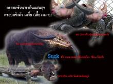 อ่ะ ๆ  อย่ามาโชว์ควายแถวนี้  เว็บอันดับ 4ของประเทศไทยเขาเสียหายเพาะความจัญไรของมรึ งหมด