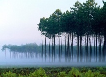 ร่วมรักษ์ป่า
