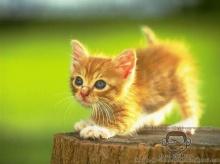 น้องแมว น่ารักมั้ย