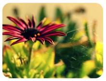Flower  &  Flower