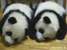 เอาใจคนรักแพนด้า : Panda น้อยจอมซน 2