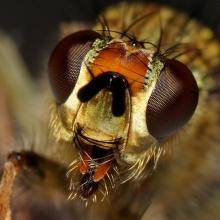 .. Dragonfly .. (o^.^o)