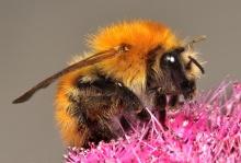 .. bee .. \(0^◇^0)/