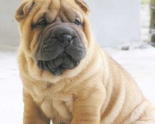 .. The Dogs : My Handy Friend ....(o^.^o)