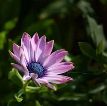 .. วันหยุดสบาย ๆ กับดอกไม้สีม่วง .. (o^.^o)