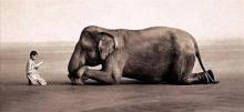 สื่อสาร..อารมณ์ศิลป์ คน & สัตว์