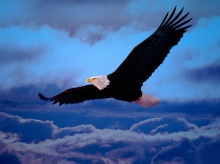 Eagle : King Of The Sky