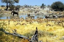 **Etosha National Park in Namibia** (1)