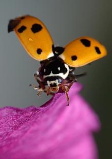 lady bug •°•.° ღ. 2