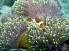 โลกใต้ทะเลที่รัก !! (3)