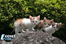 ดูภาพน่ารักของแมว.....จ้า
