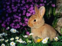 สัตว์โลก น่ารัก