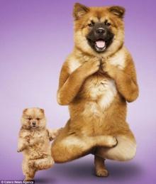 โยคะ..น้องหมา - น้องเหมียว น่ารักอ่ะ!!!