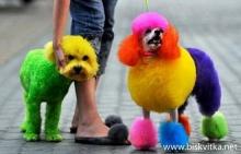 Embellished dogs in Japan