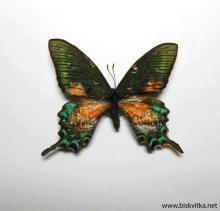 Paintings on the wings of butterflies