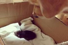 คู่ซี๊น่ารัก โกลเด้นเอ็นดูลูกแมว