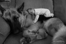 น่ารักคูณสอง สุนัขตัวโตดูแลเด็กตัวน้อย