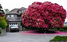 สุดยอดต้นไม้เก่าแก่ของโลกที่สวยที่สุดในโลก
