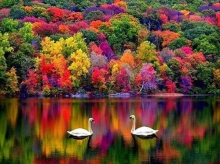ฤดูใบไม้ร่วงธรรมชาติที่สวยงาม