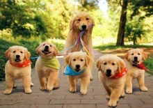 เหล่าครอบครัวสุนัขแสนอบอุ่น