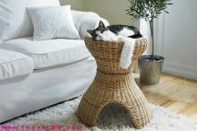 เฟอร์นิเจอร์สุดหรูของน้องแมว