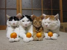 เรื่องของแมว