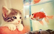 แมวเมี้ยวน่ารักอ่ะ !!