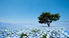 10 ภาพดอกไม้สีฟ้า 4.5 ล้านดอกบนทุ่งหญ้าที่ญี่ปุ่น