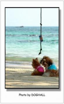 น้องหมาเที่ยวทะเล