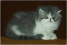 น้องแมวน่ารักอ่ะ