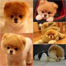 หมาตัวนี้น่ารักที่สุดอ่ะ