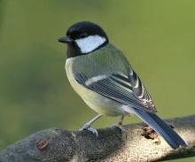 มหัศจรรย์ นกที่หาดูยาก