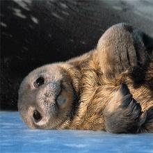 พาเหรดรูปสัตว์โลกน่ารัก