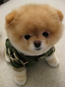 เจ้าบู หมาน้อยน่ารักอ่ะ